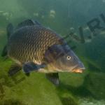 Ловля сазана осенью на реке Сакмара