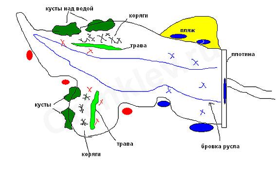 места обитания и способы ловли сазана