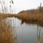 Ловля щуки на реке Каргалка