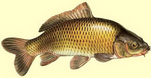 как выбрать прикормку для рыбалки
