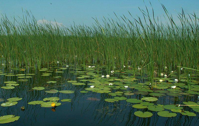 выбор места для ловли карася на пруду