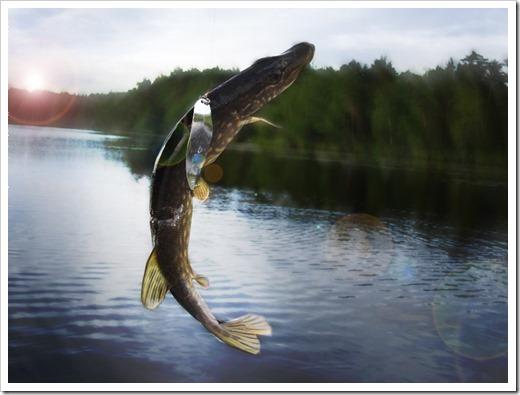 Выбор места для рыбалки при ловле щуки