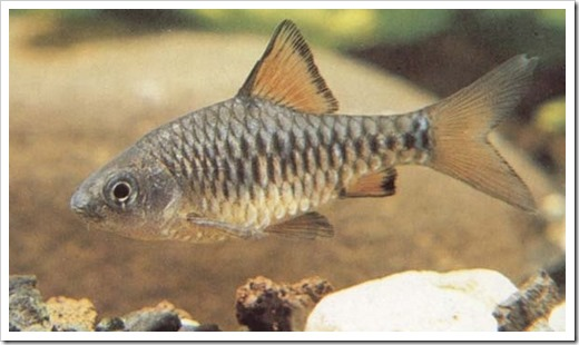 Особенности акклиматизации речных рыб