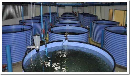 Различные системы для разведения рыбы