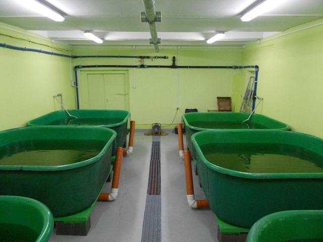 Оборудование для выращивания креветки 40