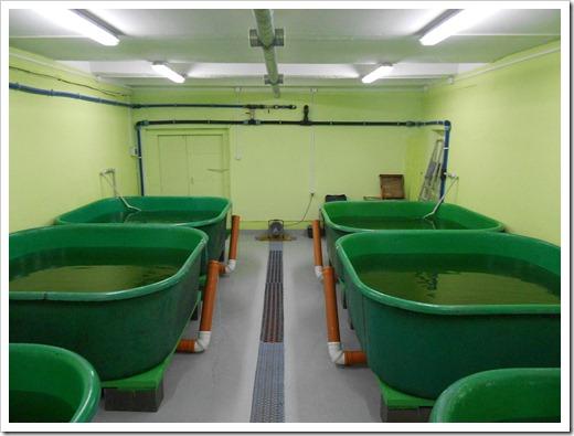 Автоматизация и рост рыбы