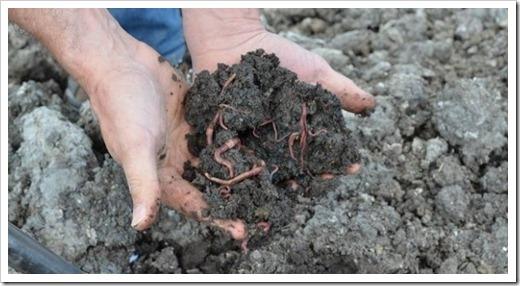 Основные критерии для выращивания червей
