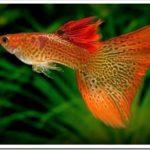 Как выбрать аквариум в подарок рыбаку и не ошибиться