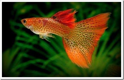 аквариум в подарок рыбаку