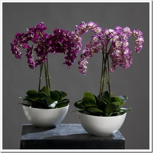 Советы по уходу за орхидеей