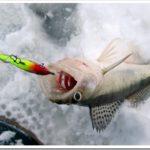 Как довезти пойманную рыбу домой?