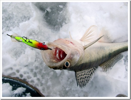 Транспортировка рыбы