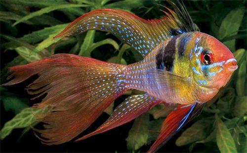Популярные виды аквариумных рыбок