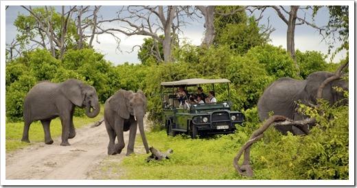 Национальный парк Chobe