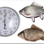 При каком давлении клюет рыба?