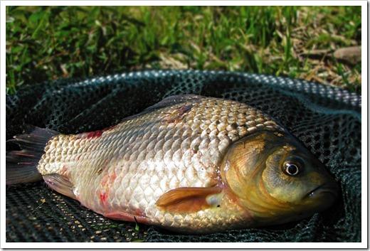 Почему лучше рыбачить на высоком уровне атмосферного давления?