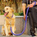 Какой поводок лучше для собаки