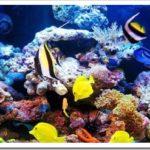 Чем отличается морской аквариум от пресноводного