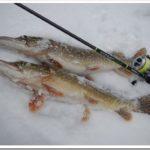 Рыбалка на щуку в зимний период