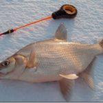 Как ловить рыбу на мормышку